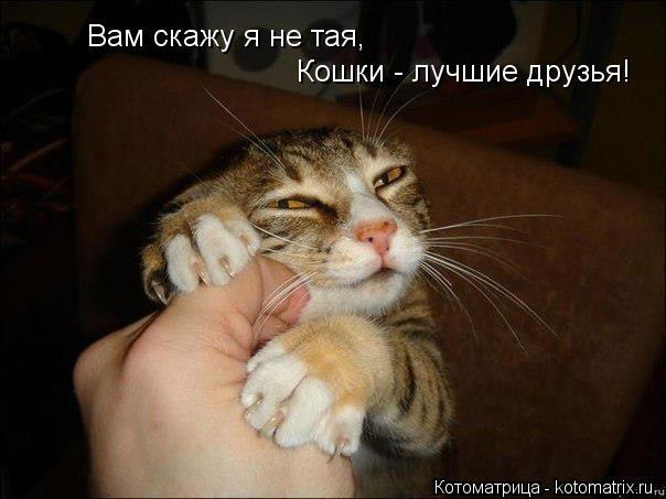 Котоматрица: Вам скажу я не тая, Кошки - лучшие друзья!
