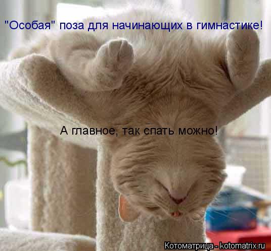 """Котоматрица: """"Особая"""" поза для начинающих в гимнастике! А главное, так спать можно!"""