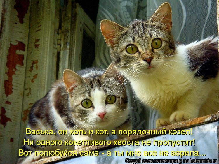 Котоматрица: Васька, он хоть и кот, а порядочный козел! Ни одного кокетливого хвоста не пропустит! Вот полюбуйся сама - а ты мне все не верила...