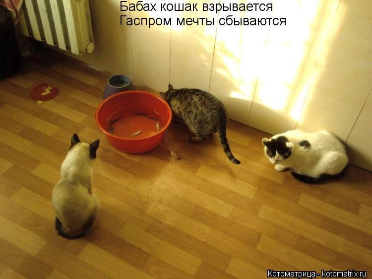 Котоматрица: Бабах кошак взрывается Гаспром мечты сбываются