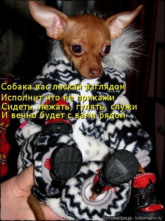 Котоматрица: Собака вас лаская взглядом Исполнит что не прикажи Сидеть, лежать, гулять, служи И вечно будет с вами рядом