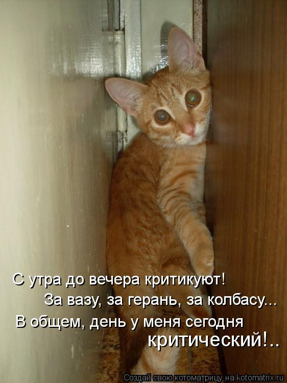 Котоматрица: С утра до вечера критикуют! За вазу, за герань, за колбасу... В общем, день у меня сегодня критический!..