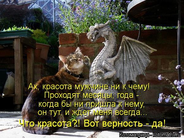 Котоматрица: Ах, красота мужчине ни к чему! Проходят месяцы, года - когда бы ни пришла к нему, он тут, и ждет меня всегда... Что красота?! Вот верность - да!