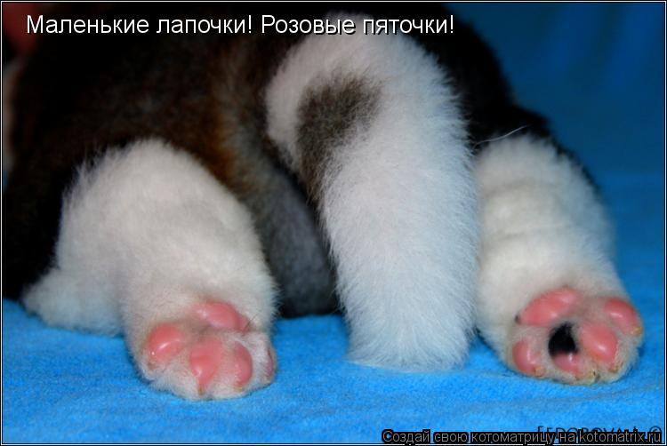 Котоматрица: Маленькие лапочки! Розовые пяточки!