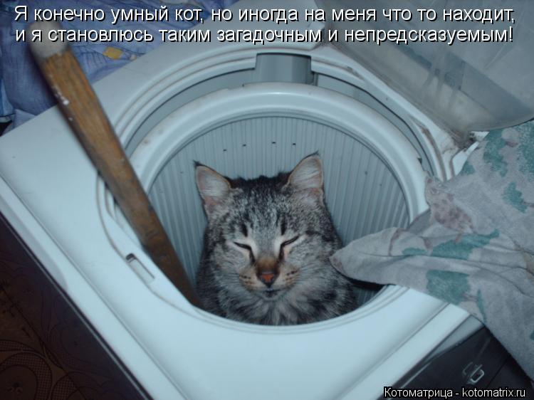 Котоматрица: Я конечно умный кот, но иногда на меня что то находит,  и я становлюсь таким загадочным и непредсказуемым!