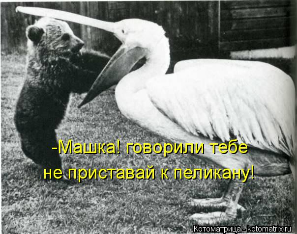 Котоматрица: -Машка! говорили тебе не приставай к пеликану!