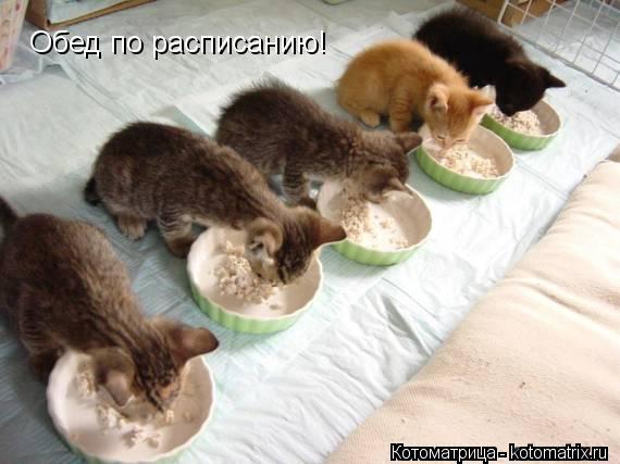 Котоматрица: Обед по расписанию!
