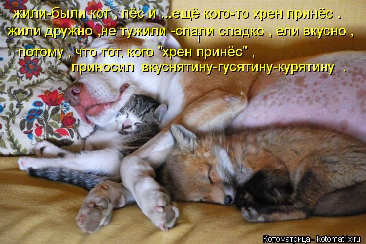 """Котоматрица: l жили-были кот , пёс и ...ещё кого-то хрен принёс .  жили дружно ,не тужили -спали сладко , ели вкусно ,  потому , что тот, кого """"хрен принёс"""" ,  прино"""