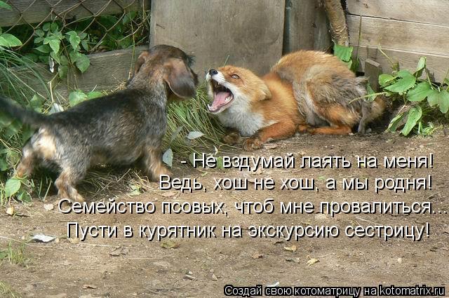 Котоматрица: - Не вздумай лаять на меня! Ведь, хош не хош, а мы родня! Семейство псовых, чтоб мне провалиться... Пусти в курятник на экскурсию сестрицу!