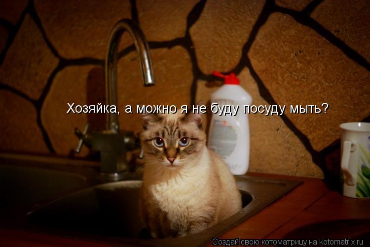 Котоматрица: Хозяйка, а можно я не буду посуду мыть?