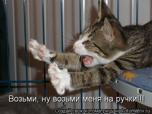 Котоматрица: Возьми, ну возьми меня на ручки!!!