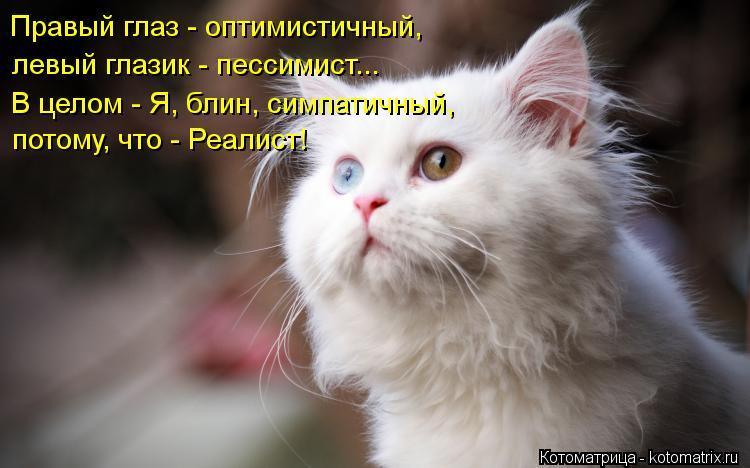 Котоматрица: Правый глаз - оптимистичный, левый глазик - пессимист... В целом - Я, блин, симпатичный, потому, что - Реалист!