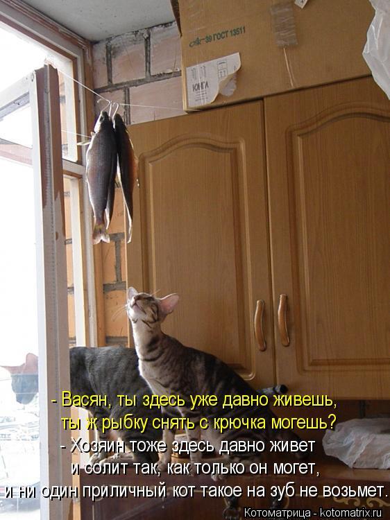 Котоматрица: - Васян, ты здесь уже давно живешь, - Хозяин тоже здесь давно живет и солит так, как только он могет, и ни один приличный кот такое на зуб не воз