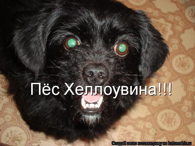 Котоматрица: Пёс Хеллоувина!!!