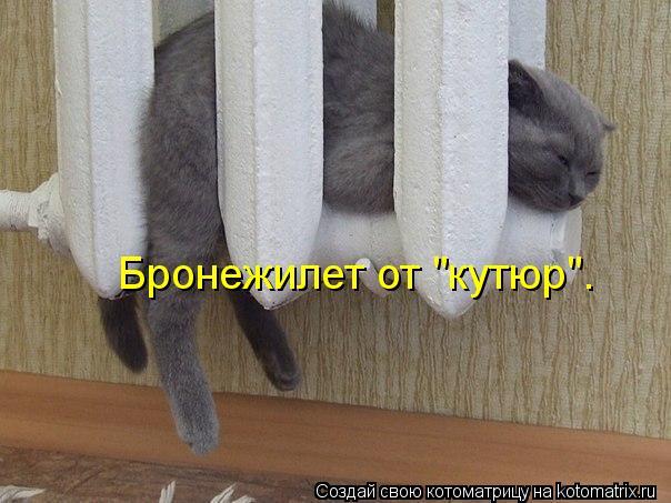 "Котоматрица: Бронежилет от ""кутюр""."