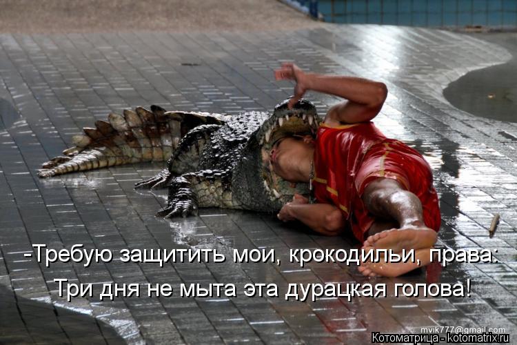 Котоматрица: -Требую защитить мои, крокодильи, права: Три дня не мыта эта дурацкая голова!