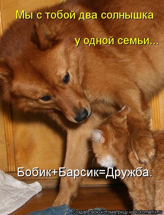 Котоматрица: Мы с тобой два солнышка у одной семьи... Бобик+Барсик=Дружба.