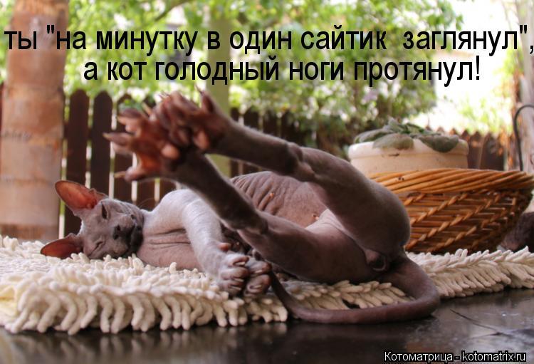 """Котоматрица: а кот голодный ноги протянул! ты """"на минутку в один сайтик  заглянул"""","""
