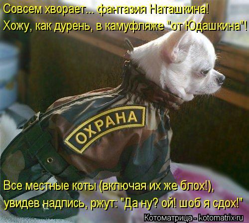 """Котоматрица: Совсем хворает... фантазия Наташкина! Хожу, как дурень, в камуфляже """"от Юдашкина""""! Все местные коты (включая их же блох!), увидев надпись, ржут: """""""