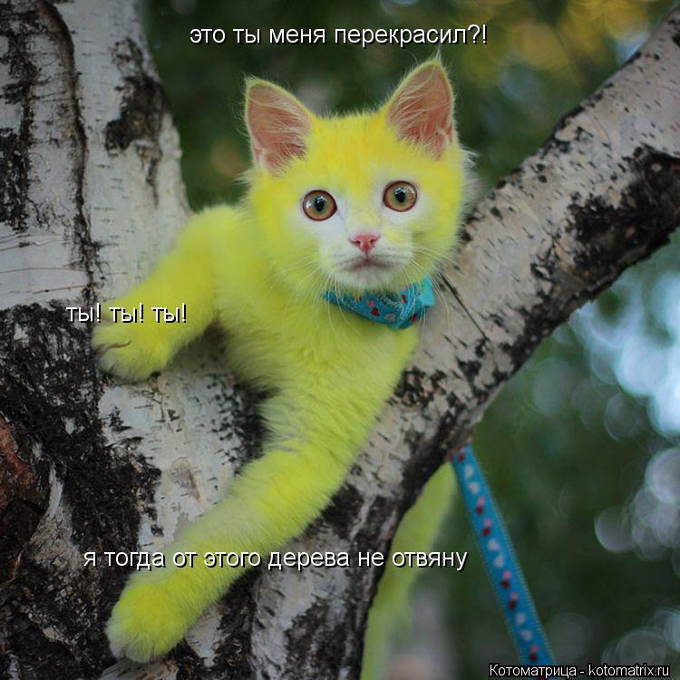 Котоматрица: это ты меня перекрасил?! ты! ты! ты! я тогда от этого дерева не отвяну