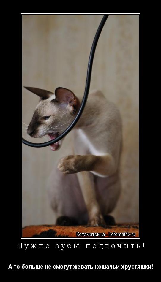 Котоматрица: Нужно зубы подточить! А то больше не смогут жевать кошачьи хрустяшки!