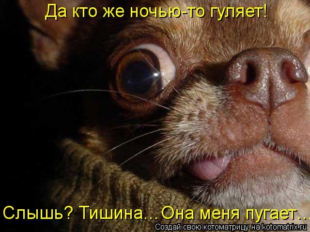 Котоматрица: Да кто же ночью-то гуляет!  Слышь? Тишина…Она меня пугает…