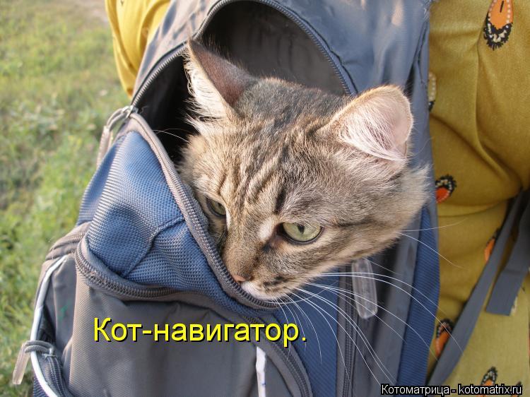 Котоматрица: Кот-навигатор.
