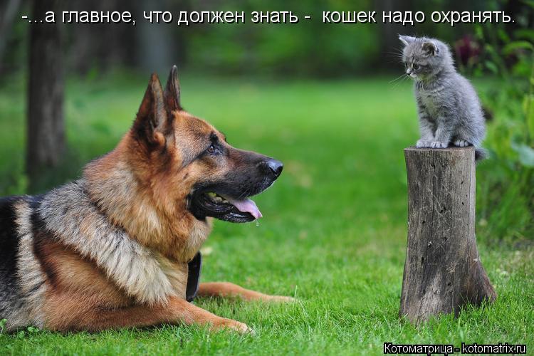 Котоматрица: -...а главное, что должен знать -  кошек надо охранять.
