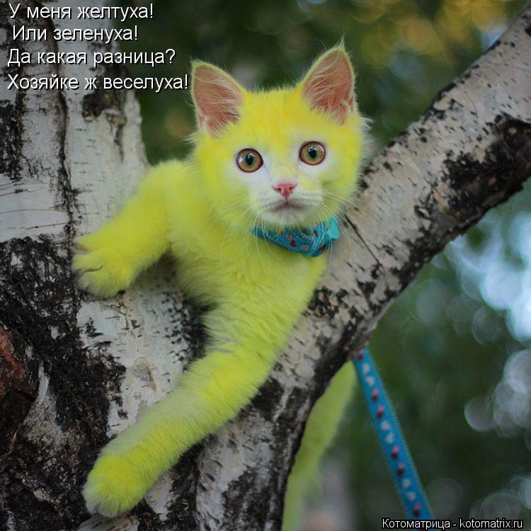 Котоматрица: У меня желтуха! Или зеленуха! Да какая разница? Хозяйке ж веселуха!