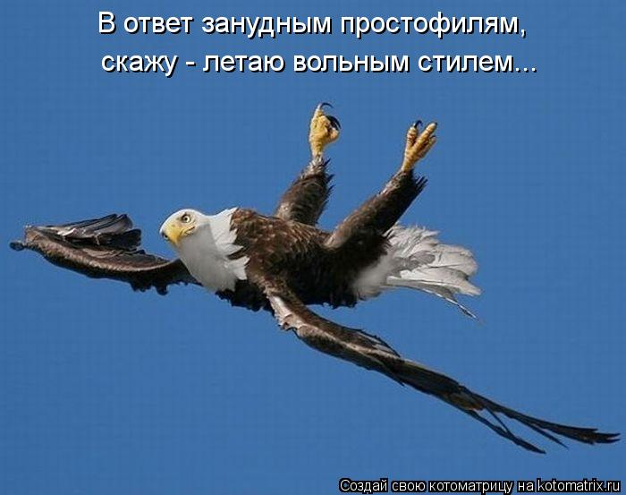 Котоматрица: В ответ занудным простофилям,  скажу - летаю вольным стилем...