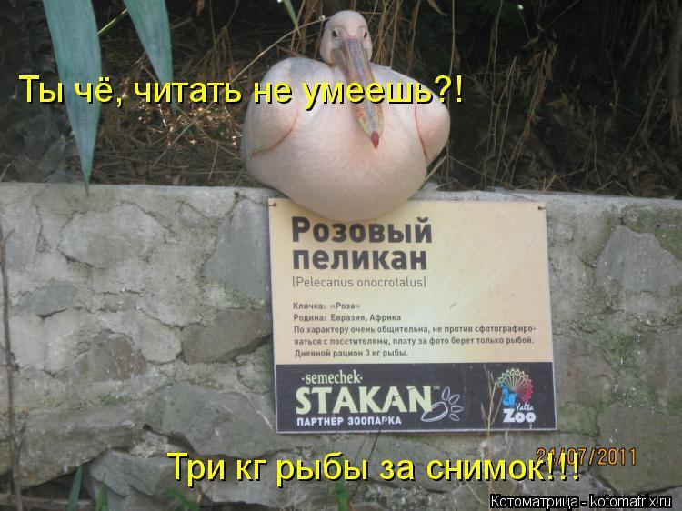 Котоматрица: Ты чё, читать не умеешь?! Три кг рыбы за снимок!!!
