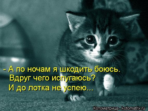 Котоматрица: Вдруг чего испугаюсь?  И до лотка не успею... - А по ночам я шкодить боюсь.