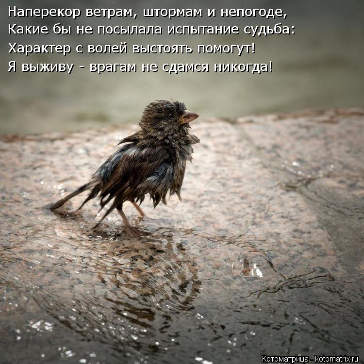 Котоматрица: Наперекор ветрам, штормам и непогоде, Какие бы не посылала испытание судьба: Характер с волей выстоять помогут! Я выживу - врагам не сдамся н