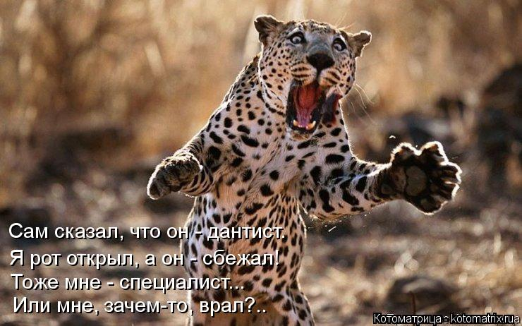 Котоматрица: Сам сказал, что он - дантист. Я рот открыл, а он - сбежал! Тоже мне - специалист... Или мне, зачем-то, врал?..