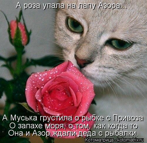 Котоматрица: А роза упала на лапу Азора... О запахе моря, о том, как когда то Она и Азор ждали деда с рыбалки. А Муська грустила о рыбке с Привоза
