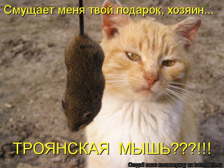 Котоматрица: Смущает меня твой подарок, хозяин... ТРОЯНСКАЯ  МЫШЬ???!!!
