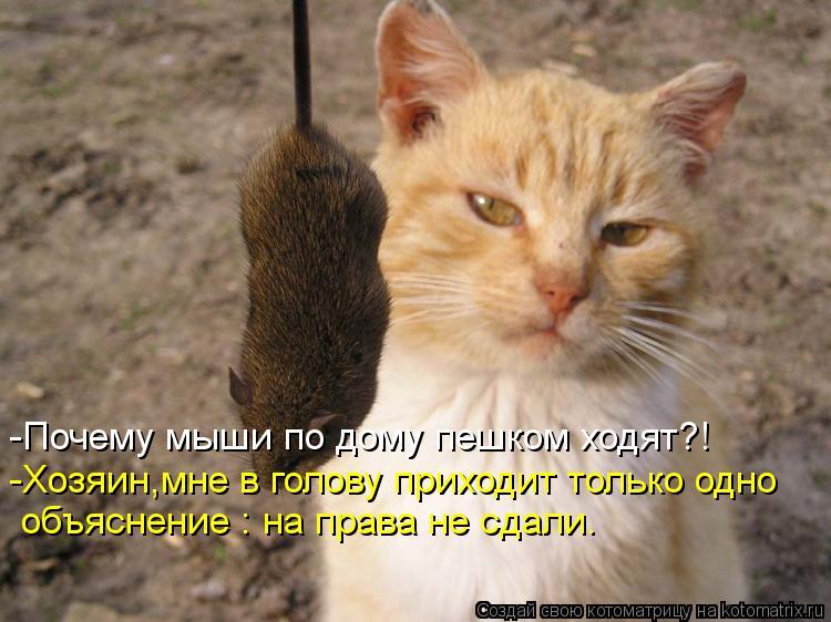 Котоматрица: -Почему мыши по дому пешком ходят?! -Хозяин,мне в голову приходит только одно объяснение : на права не сдали.