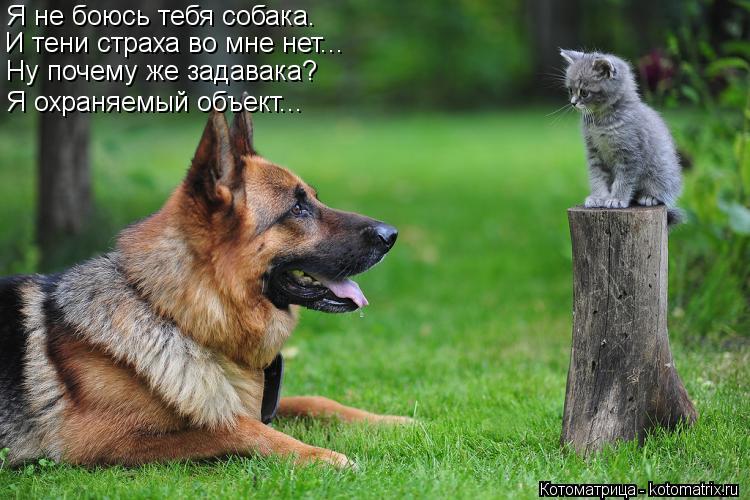 Котоматрица: И тени страха во мне нет... Я не боюсь тебя собака. Ну почему же задавака? Я охраняемый объект...
