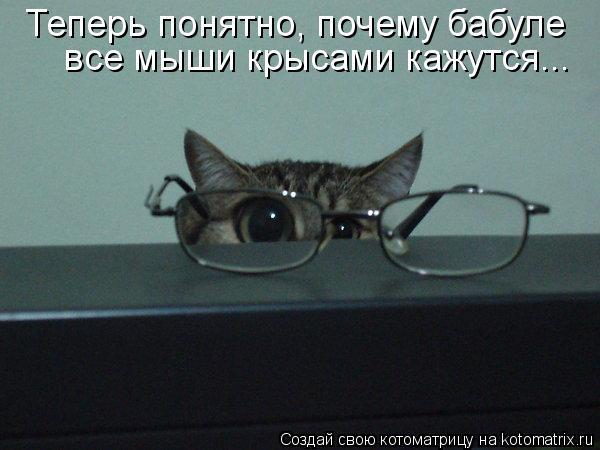 Котоматрица: все мыши крысами кажутся... Теперь понятно, почему бабуле