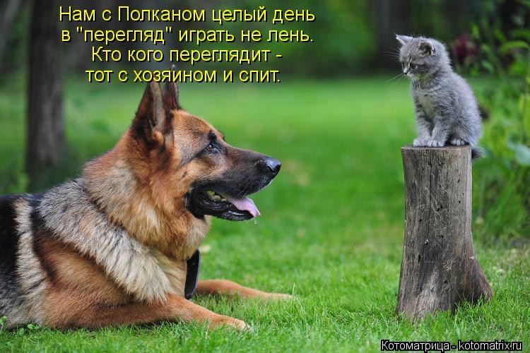 """Котоматрица: Нам с Полканом целый день в """"перегляд"""" играть не лень. тот с хозяином и спит. Кто кого переглядит -"""