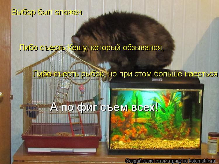 Котоматрица: Выбор был сложен. Либо съесть Кешу, который обзывался, Либо съесть рыбок, но при этом больше наесться. А по фиг съем всех!
