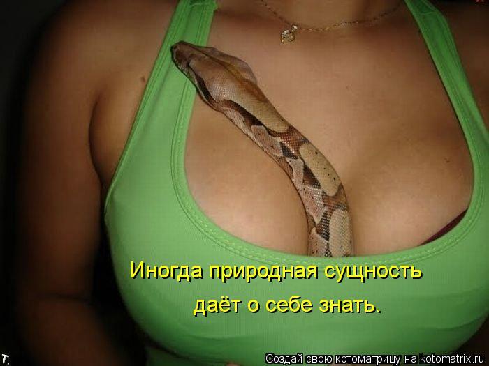 Котоматрица: Иногда природная сущность даёт о себе знать.