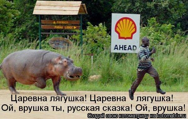Котоматрица: Царевна лягушка! Царевна    лягушка! Ой, врушка ты, русская сказка! Ой, врушка!