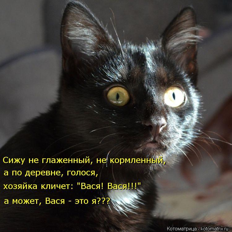 """Котоматрица: Сижу не глаженный, не кормленный, а по деревне, голося, хозяйка кличет: """"Вася! Вася!!!"""" а может, Вася - это я???"""