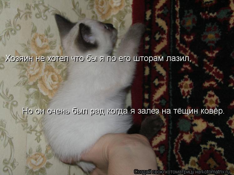 Котоматрица: Хозяин не хотел что бы я по его шторам лазил, Но он очень был рад когда я залез на тёщин ковёр.