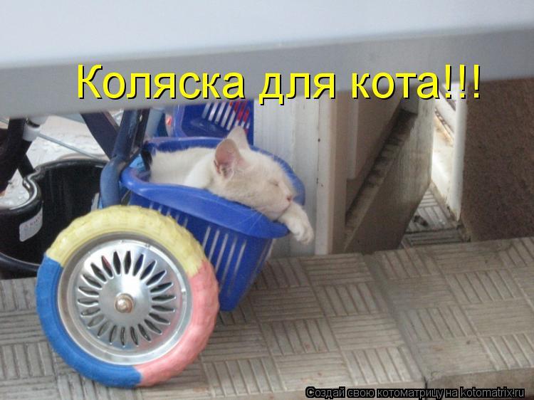 Котоматрица: Коляска для кота!!!
