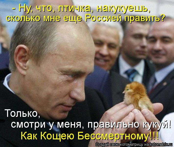 http://kotomatrix.ru/images/lolz/2012/08/07/kotomatritsa_h.jpg