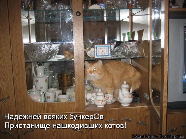 Котоматрица: Надежней всяких бункерОв Пристанище нашкодивших котов!