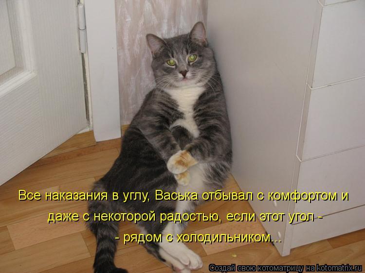 Котоматрица: Все наказания в углу, Васька отбывал с комфортом и  даже с некоторой радостью, если этот угол -   - рядом с холодильником...