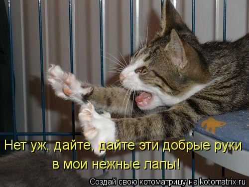 Котоматрица: Нет уж, дайте, дайте эти добрые руки в мои нежные лапы!